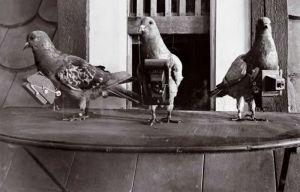 800px-Pigeoncameras